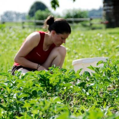 Antonia zwischen Kartoffelreihen
