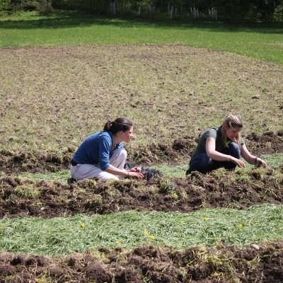 Christl & Antonia beim Kartoffel setzen