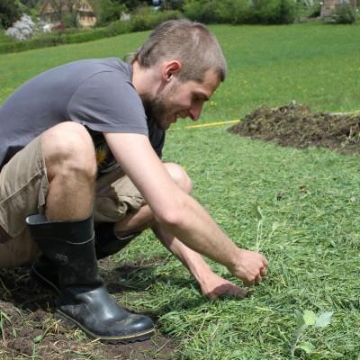 Flo pflanzt Kohlrabi