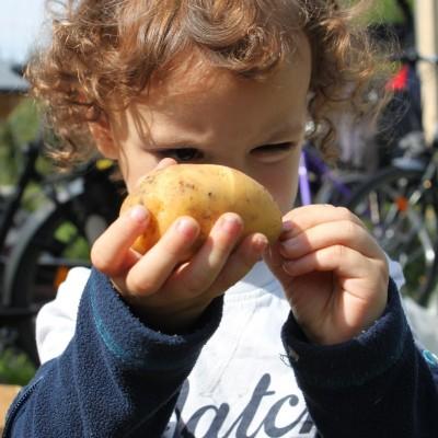 Paul inspiziert die Kartoffel